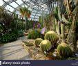 Botanischer Garten Und Botanisches Museum Berlin Dahlem Neu Berliner Botanischer Garten Stockfotos & Berliner