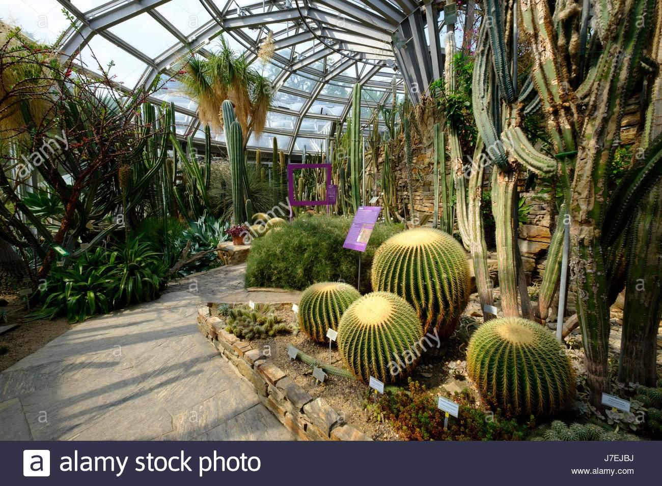 kaktus anzeige im gewachshaus im berliner botanischen garten in dahlem berlin deutschland j7ejbj