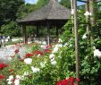 Brunnen Im Garten Bohren Luxus Bot Garten