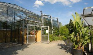 34 Einzigartig Chemnitz Botanischer Garten Schön