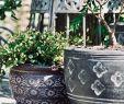 China Garten Luxus Handgefertigt In Thailand Wer Spaß An Gärtnern Und