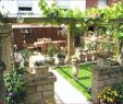 Chinesischer Garten Berlin Das Beste Von Pflanzen Für Sichtschutz — Temobardz Home Blog