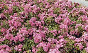 25 Inspirierend Chinesischer Garten Frankfurt Inspirierend