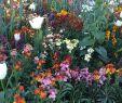 Claude Monet Garten Inspirierend Painter Claude Monet S Garden Giverny France