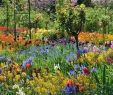 Claude Monet Garten Neu 65 Fresh Beautiful Spring Garden Landscaping for Front Yard