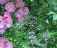 Cottage Garten Anlegen Inspirierend Cottage Garten Ideen