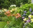 Cottage Garten Anlegen Neu Nantucket Cottage Garden