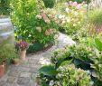 Cottage Garten Anlegen Schön Was Für Ein Grandioser Tagwir Haben Ihn Ihn Vollen Zügen
