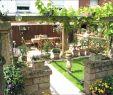 Cottage Garten Neu Sichtschutz Garten Pflanzen — Temobardz Home Blog