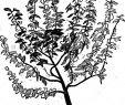 Dekoration Für Garten Reizend Buchjahr1868 Stockfotos & Buchjahr1868 Bilder Alamy
