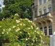 Dresden Botanischer Garten Luxus Hotel Villa Lalee Ab 54€ 7̶4̶€Ì¶ Bewertungen Fotos
