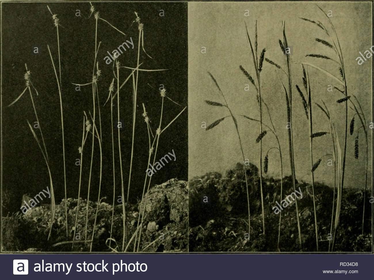 das leben der pflanze plants plants plants phytogeography 152 5ic rfcr ntce brafonifrfjc iiarcgcl 9apoieon slnftofe 311 einer jicnge rfinbungcn qab f erucrifoinintc man nun in 5erc anuin bie rfinbung auf jicrfjuten 3u fdrei6en bie fcitbem nicft mclv iniebcr unterging fonbcrn einige orljunberte fpter al 4 crgomcntquot ben tapijru noftnbig uergcifcn liclj 2ic anbercn 3gteriuanbten ber opierftaube nu ber attung cyperus finb fr bie triipcnlntpfc fcnngeicnenb ginetne aerbingo unanfenlid e umfinnnen nod in jjjitteleuropa xei RD34D8