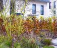 Edelstahlbecken Garten Elegant Die 91 Besten Bilder Von Büro Renate Waas Gartendesign