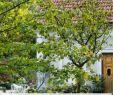 Ein Schweizer Garten Das Beste Von Garten T Räume Für Familien Mit Sen 10 Tipps Vom Profi