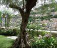Englischer Garten Parken Einzigartig Edel Emotional Domus Et Luxury Bewertungen Fotos