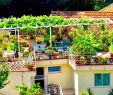 Exotischer Garten Von Monaco Luxus Villa Sud Nice Bewertungen Fotos & Preisvergleich Nizza