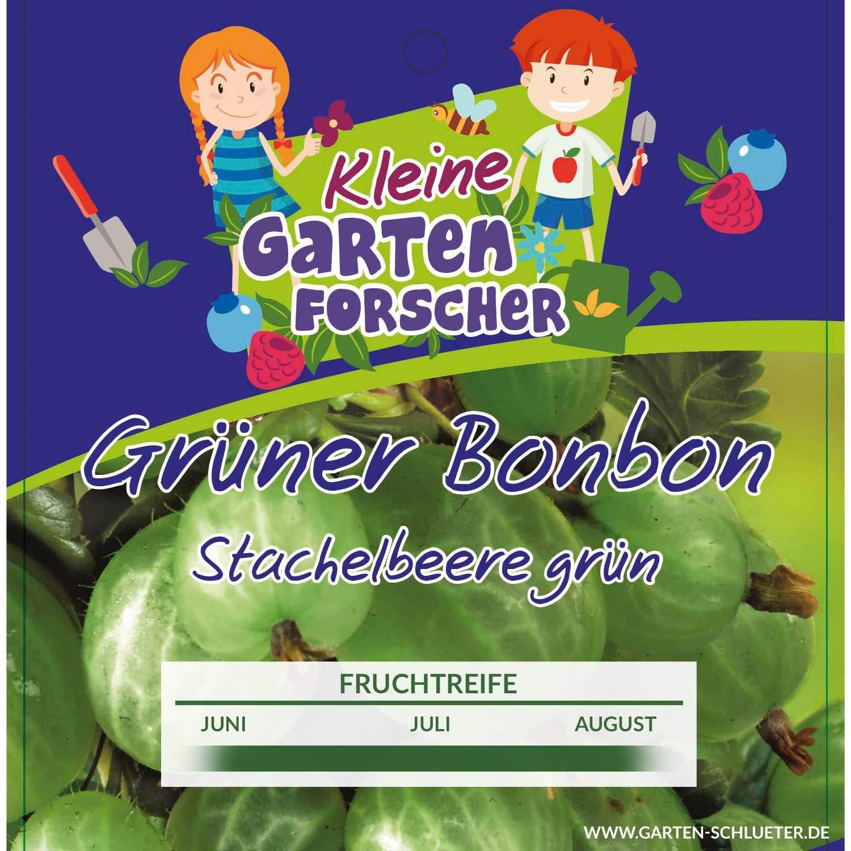 1 Gruene Stachelbeere Gruener Bonbon Kleine Gartenforscher Ribes uva crispayGtSs0tioJQbu