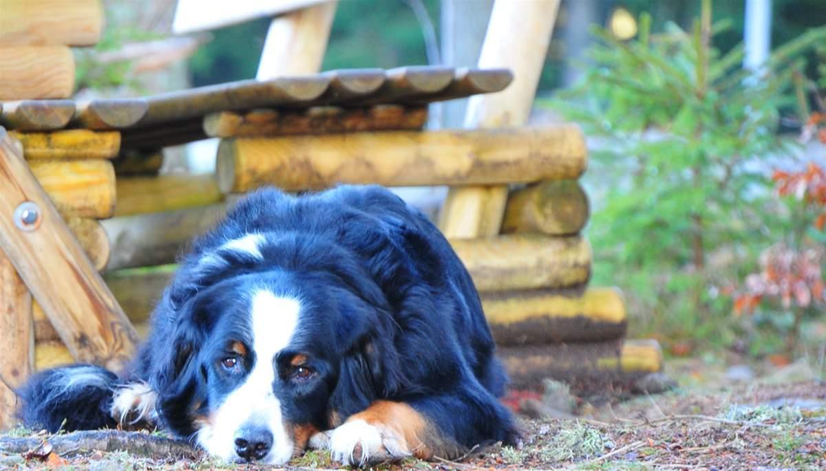ferienhaus schwarzwald hund