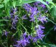 Flora Garten Das Beste Von Wiesenglockenblumen Und Farn Garten Gartenglück
