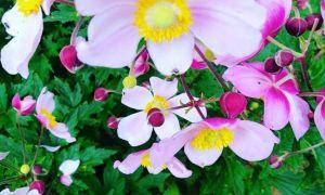 31 Frisch Flora Garten Einzigartig