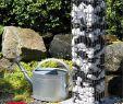 Gabionen Garten Reizend Wasserzapfsäule Gabione Inkl Wasseranschluss