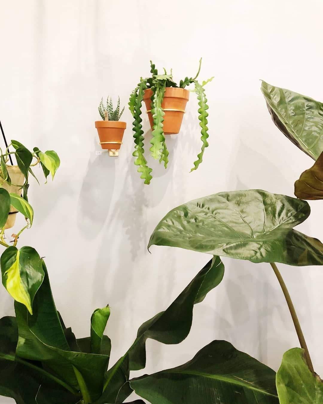 garten akzent frisch planty rings wandhalterung fur pflanzen im botanical room in of garten akzent