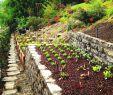 Garten Am Hang Ideen Bilder Frisch Terasovit½ Zahradn Beton Vyhledáván Google