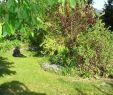 Garten Angebote Einzigartig Garten
