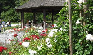 27 Reizend Garten Augsburg Schön
