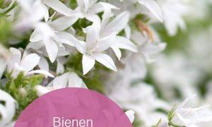 30 Reizend Garten Bodendecker Neu