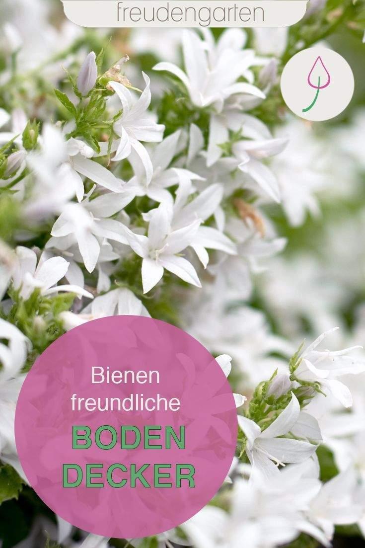 Garten Bodendecker Das Beste Von Bienenfreundliche Bodendecker