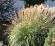 Garten Bodendecker Frisch Pflegeleichten Garten Mit üppigen Beeten Anlegen