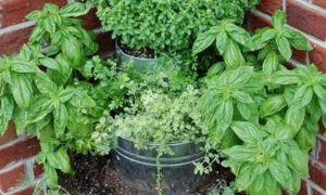 33 Neu Garten Büsche Frisch
