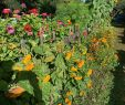 Garten Der Welt Berlin Luxus Himmelreich Rügen Bewertungen Fotos & Preisvergleich