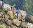 Garten Drainage Neu Anbringen Von Einem Vogelschutznetz Hilfreiche Tipps
