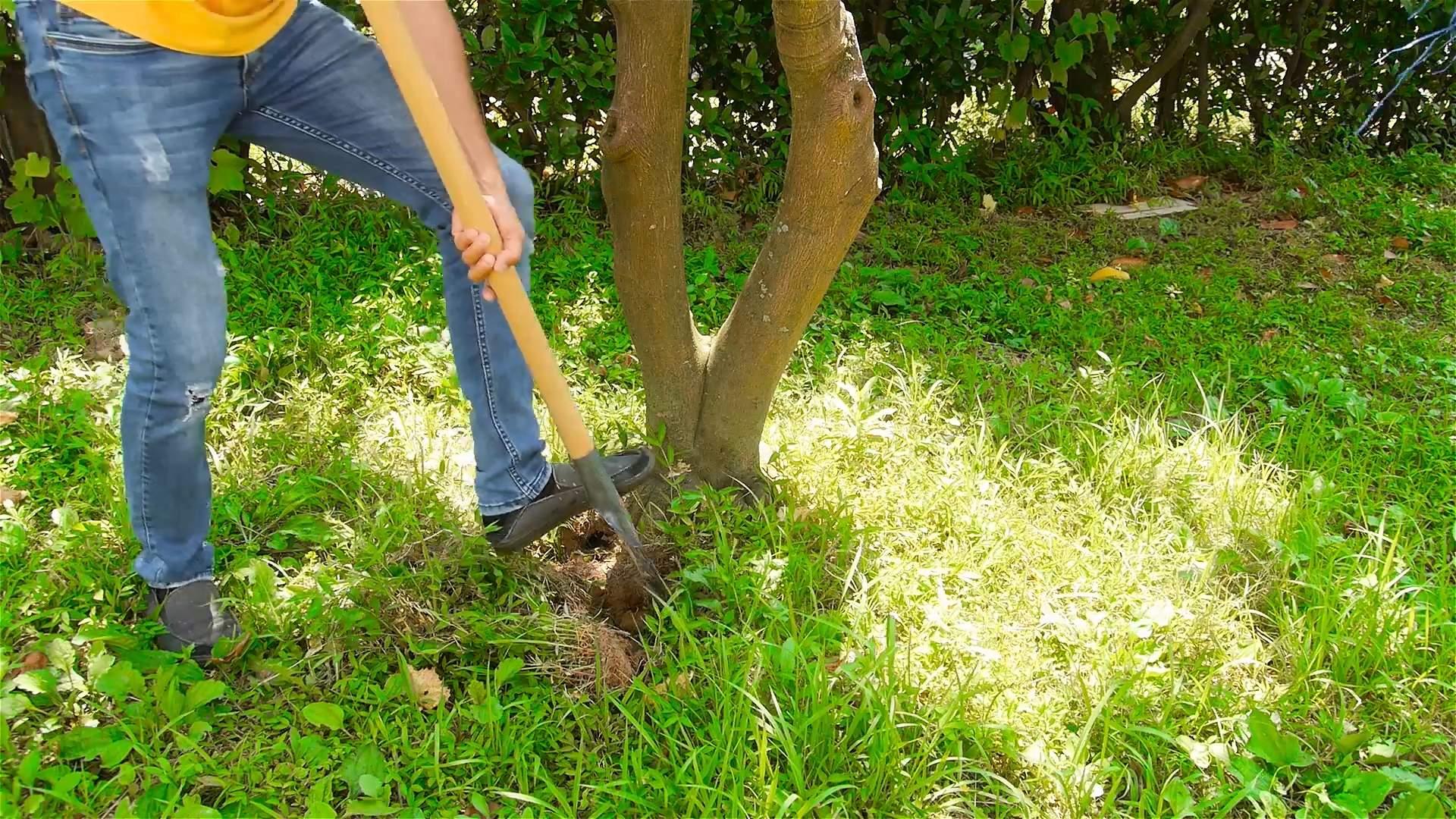 Edge a Lawn Step 10 Version 2