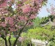 Garten Für Faule Einzigartig Tai Chi & Qigong Im Zentrum Für Bewegungskunst Taijiqigong