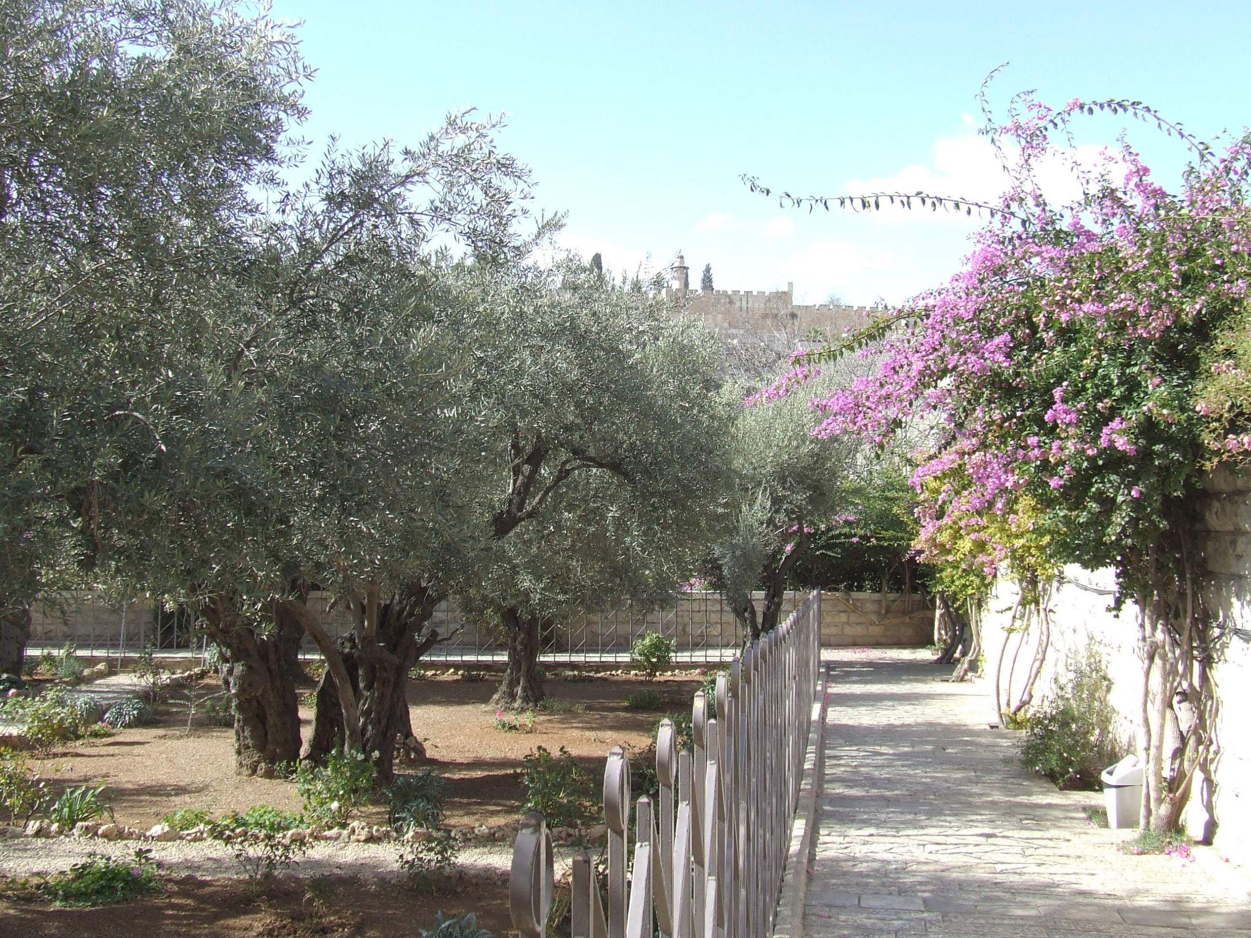 Jerusalem Garden of Gethsemane %