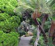 Garten Gezemaneh Schön Besuch Im Meditationsgarten In Encinitas San Diego