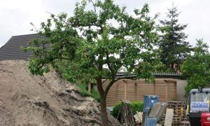38 Neu Garten Hamburg Einzigartig