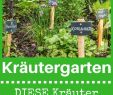 Garten Hochbeet Einzigartig Kräutergarten Anlegen Einen Kräutergarten Kannst Du Beinahe