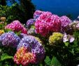 Garten Hortensie Genial Hortensien In 2020