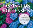 Garten Hortensie Luxus Faszination Hortensien