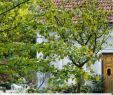 Garten Ideen Kinder Einzigartig Garten T Räume Für Familien Mit Sen 10 Tipps Vom Profi