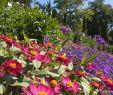 Garten Insel Frisch Ein Blumenmeer Auf Der Insel Mainau Im sommer Am Bodensee