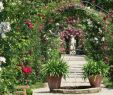 Garten König Inspirierend Stadtwiki Baden Baden