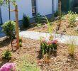 Garten König Wiefelstede Elegant Der Grüne Daumen