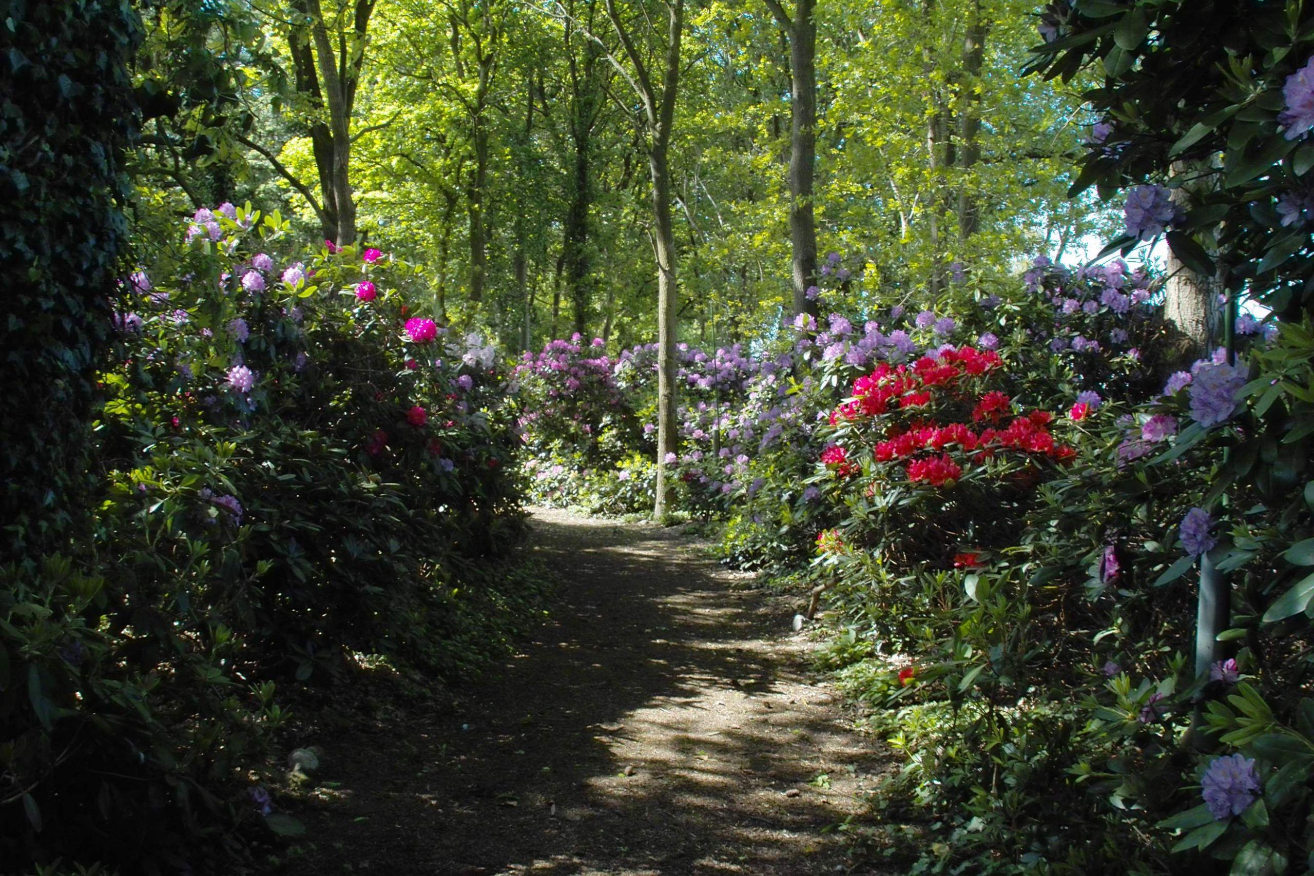 Garten König Wiefelstede Neu Mit Liebe Zum Detail Gartenträume In Wiefelstede