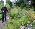Garten Landschaftsbau Berlin Neu Pin Auf Gartentouren ✿ Gardentours