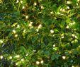 Garten Led Frisch Garten Lichterkette Knirke Von Sirius Grün
